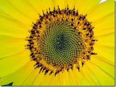fibonacci-1599007_1280
