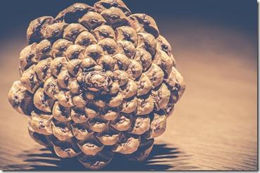 pinecones-3026691_1280
