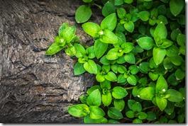 plants-1270892_1920